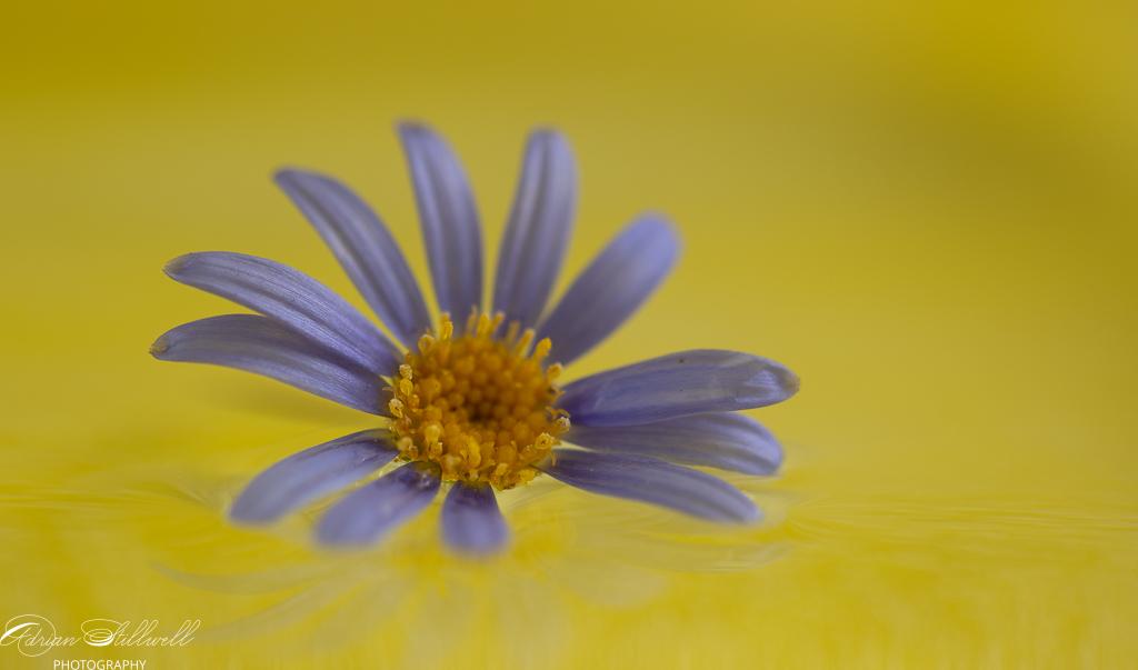 flower on water-1.jpg
