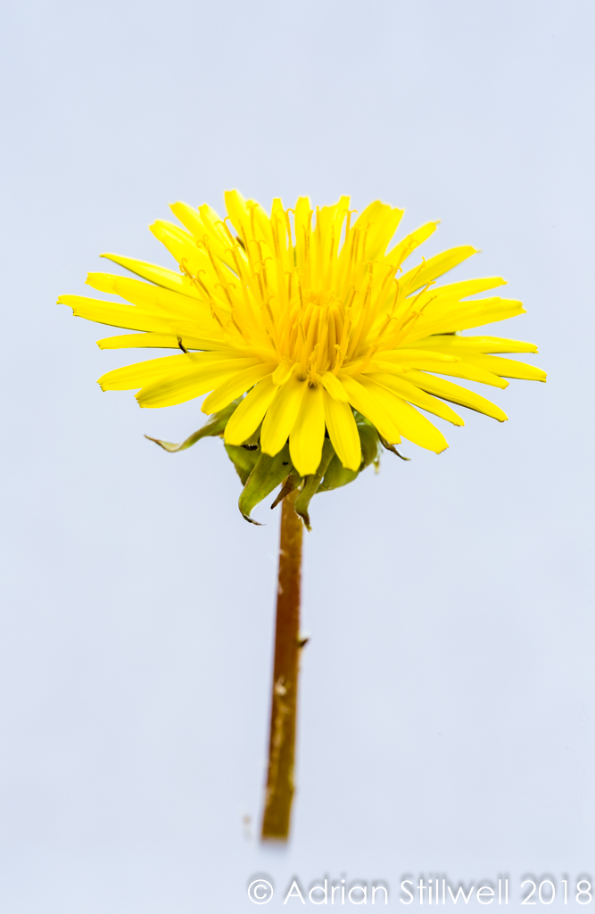 Flower SL-2.jpg