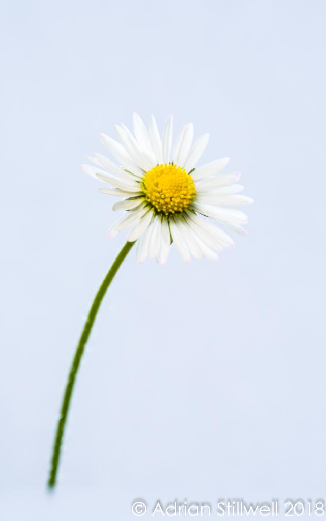 Flower SL-3.jpg
