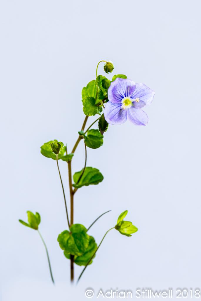 Flower SL-4.jpg