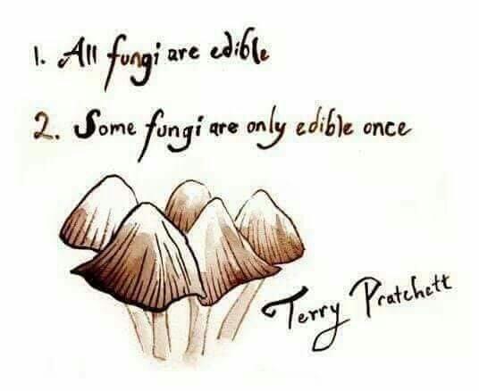 fungi-1.jpg