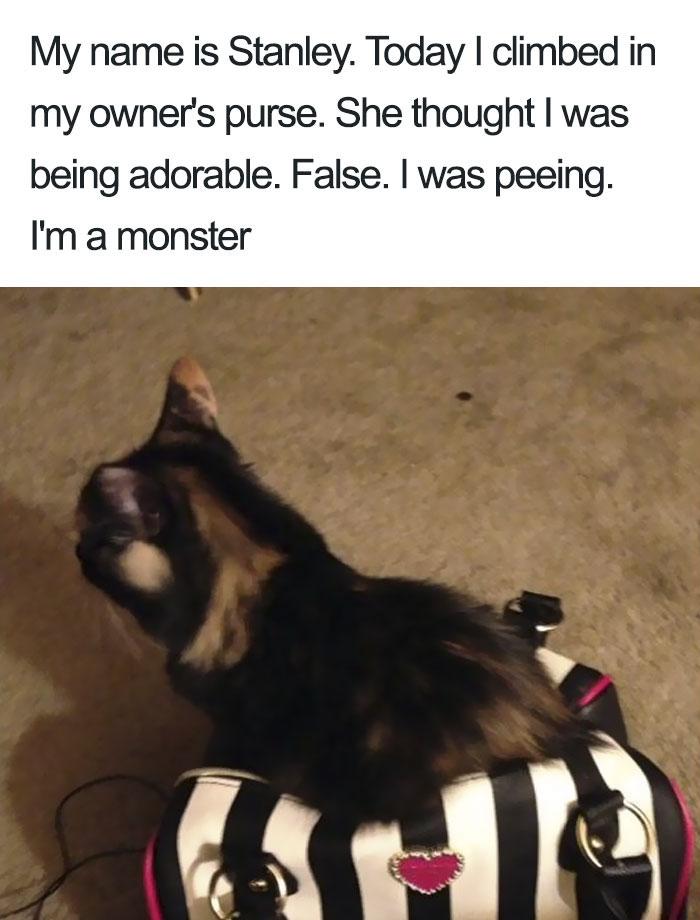 funny-cat-shaming-109-5b48b4904dbfd__700.jpg