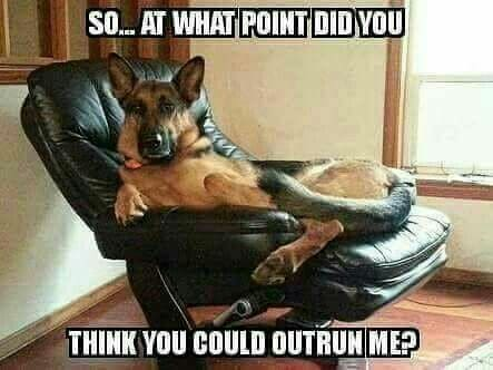 German-Shepherd-Meme-So___-at-what-point-did-you-think-you-could-outrun-me-1.jpg