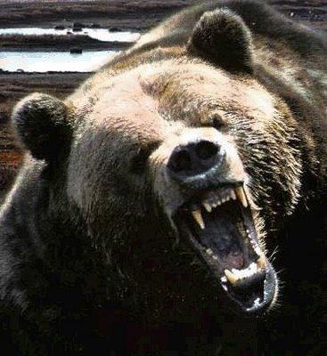 Grandpa Bear.jpg