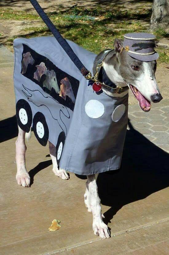 greyhound - 29.jpg
