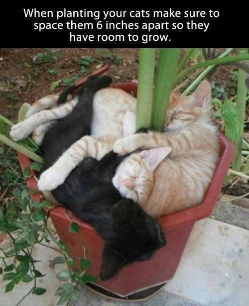 grow kittens.jpg