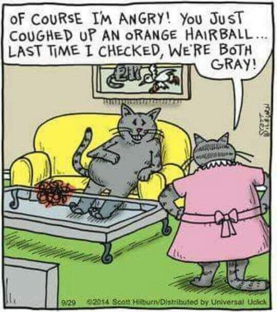 hairball.jpg