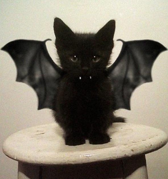halloween-cat-costumes-fb9.png