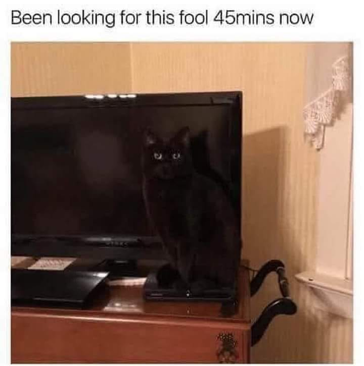 Hidden black cat ninja.jpg