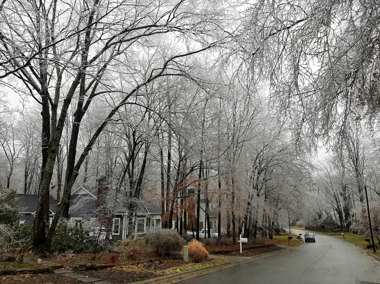 ice_trees.jpg