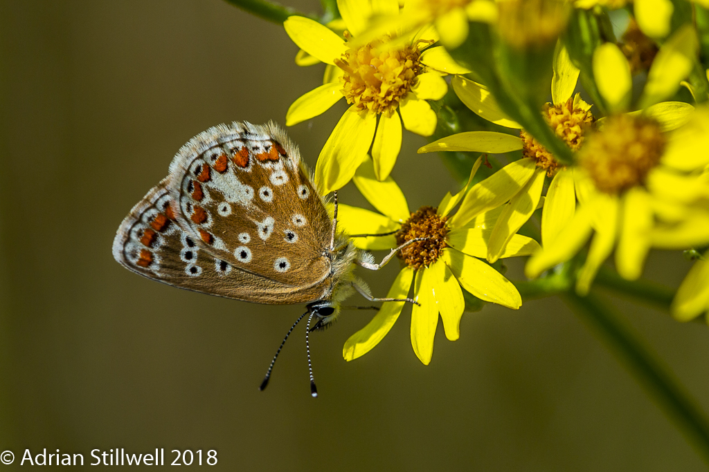 Insects-2.jpg