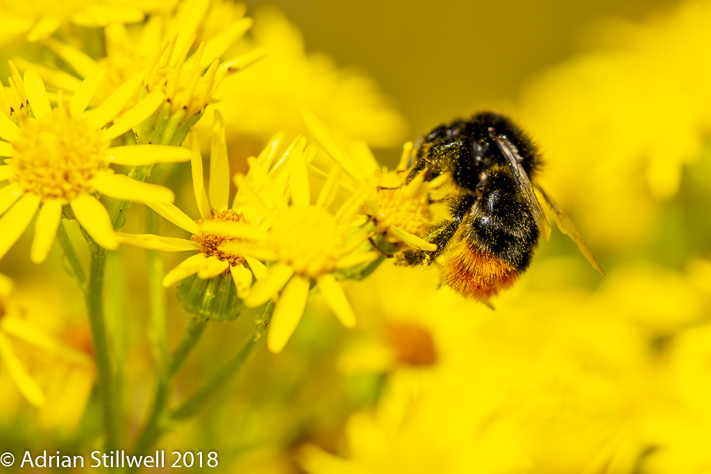 Insects-3.jpg