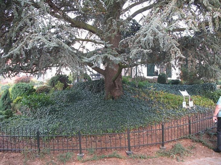 Jack's Tree.jpeg