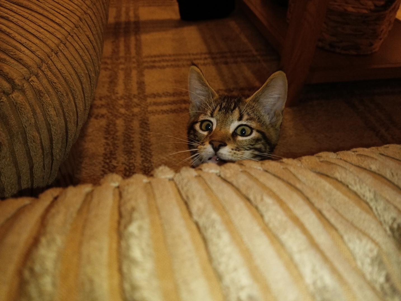 Kitty03.jpg