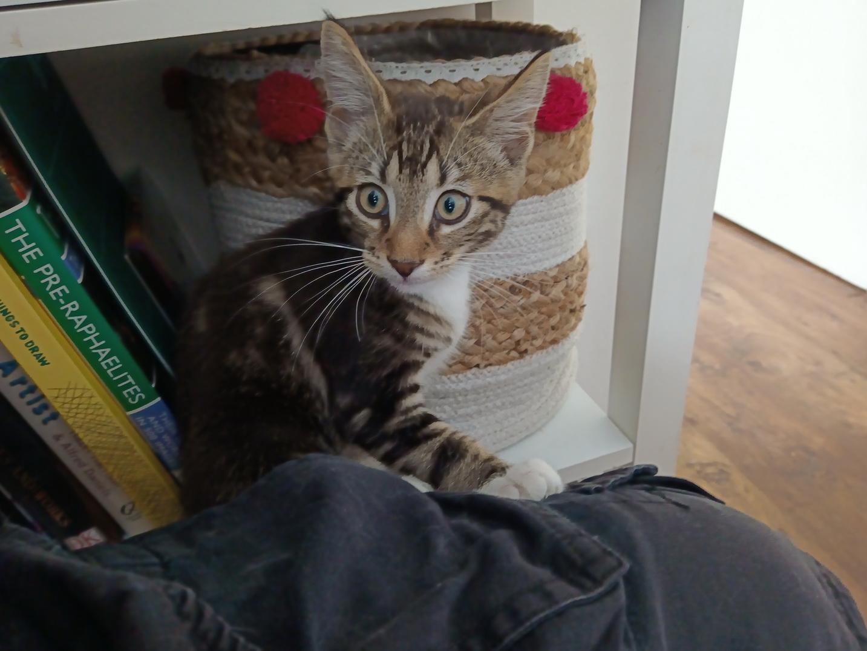 Kitty09.jpg