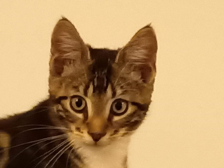 Kitty11.jpg