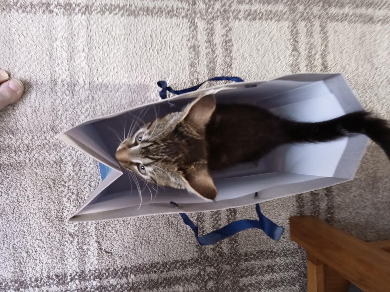 Kitty13.jpg