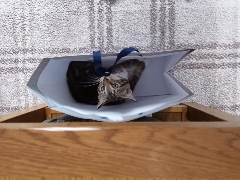 Kitty16.jpg