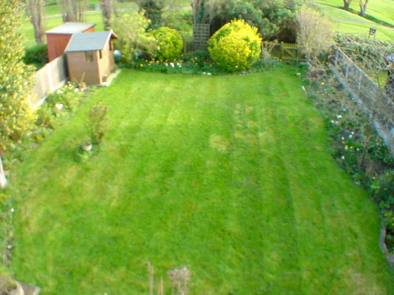 Lawn Cut.jpg