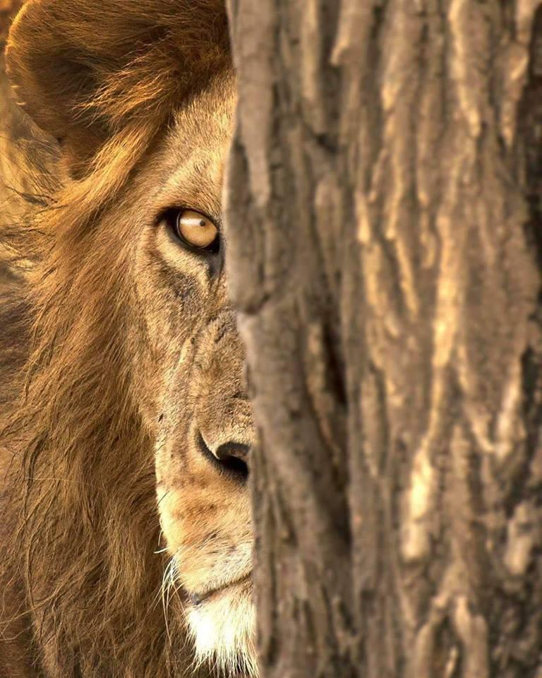 lionise.jpg