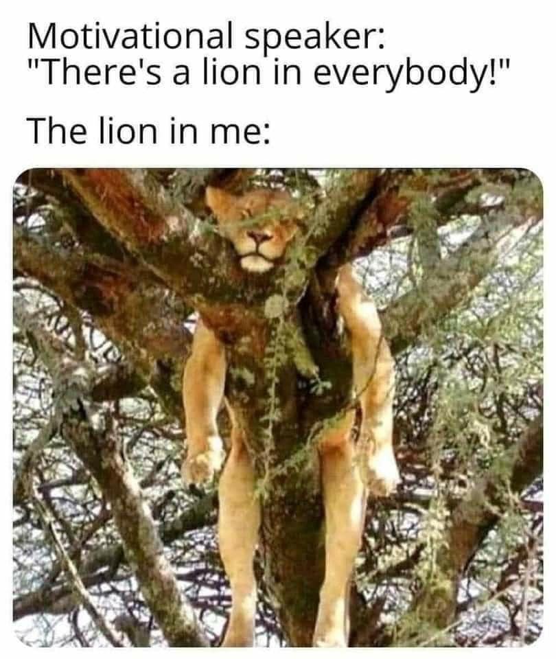 lionrest.jpg