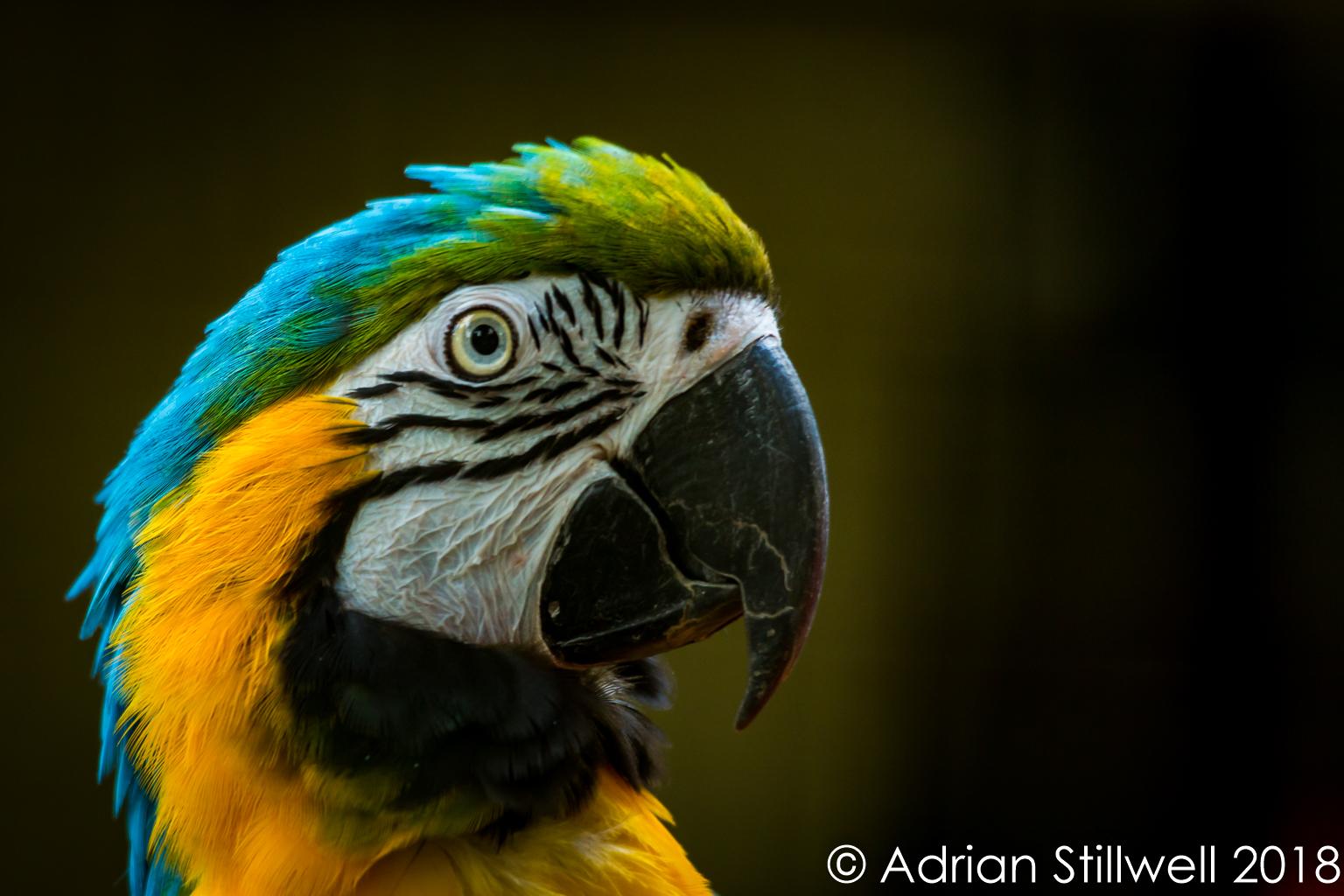 Macaw-1.jpg