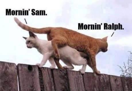 morning sam.jpg