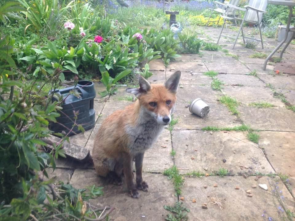 mums fox (1).jpg