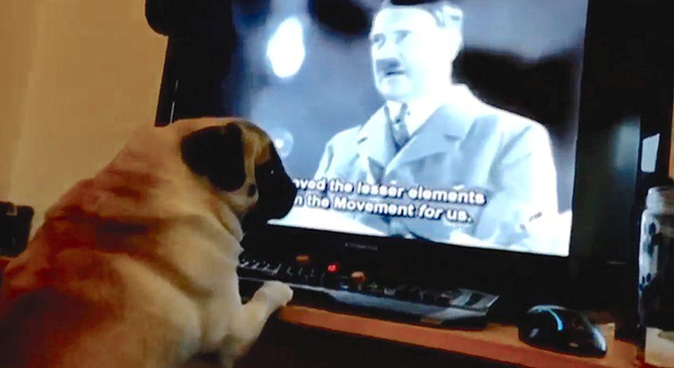 nazi_pug.jpg