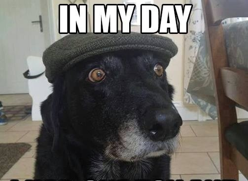 Old Timer Dog with flat cap crop.jpg