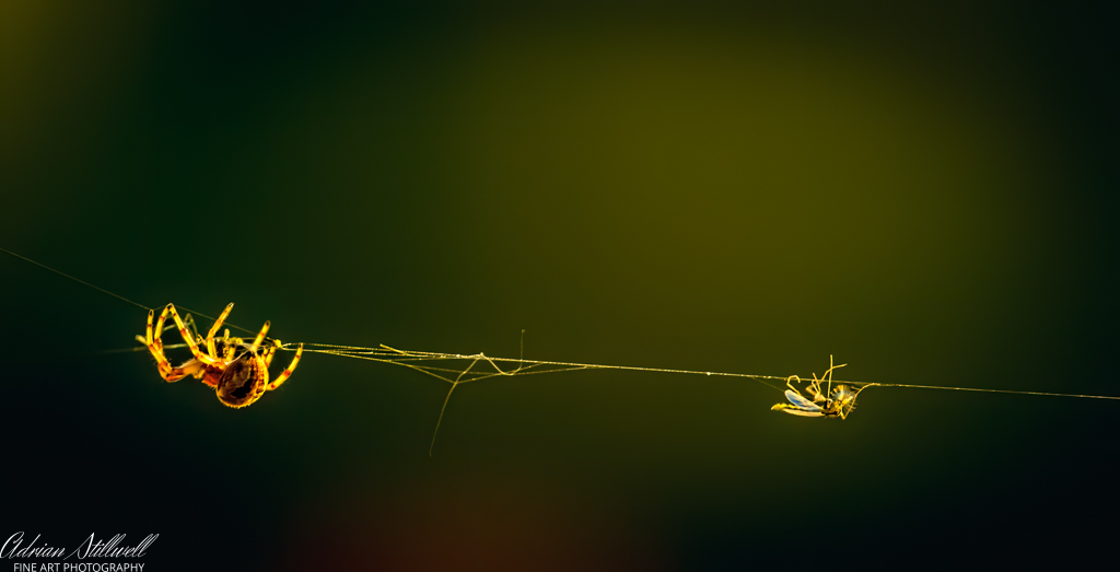 On a Wire (1 of 1).jpg