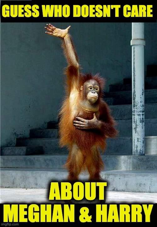 Orang-Otan knows not of Harry and Merkle.jpg