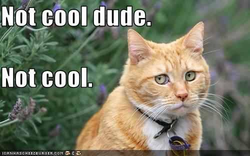 Orange Tabby says Not Cool Dude.jpg