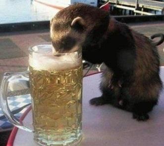 otter-drinking-beer.jpg