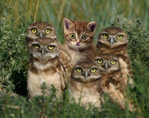 owl cat.jpg