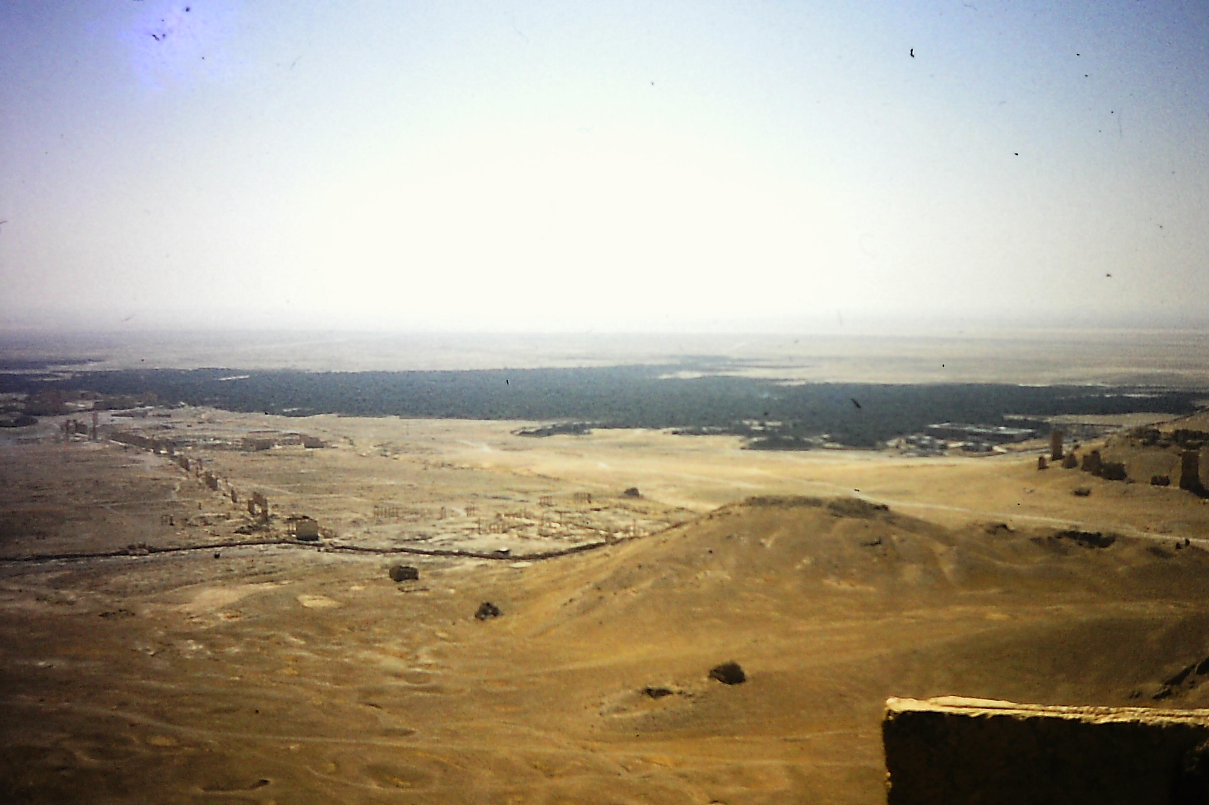 Palmyra 2.JPG