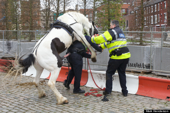 police horse.jpg