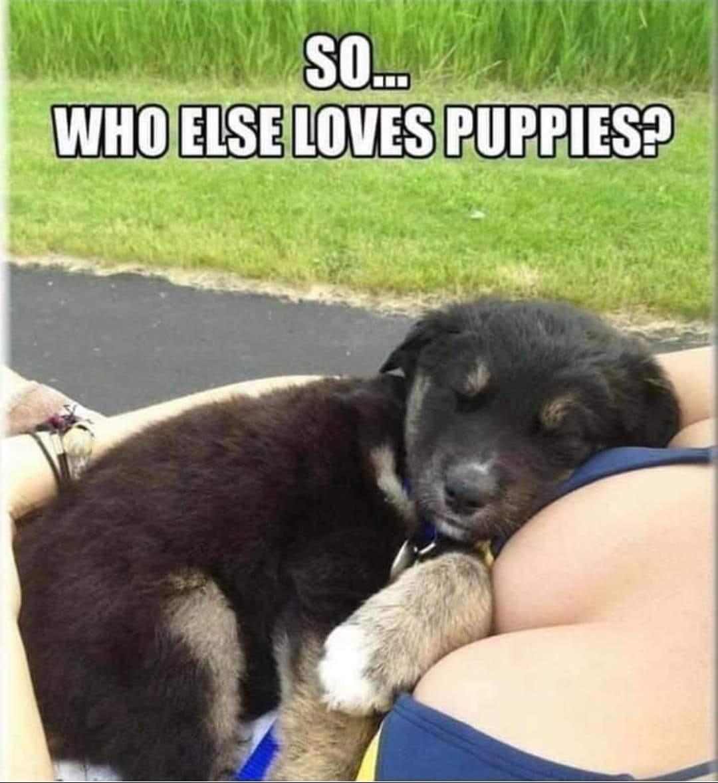 puppieslove.jpg