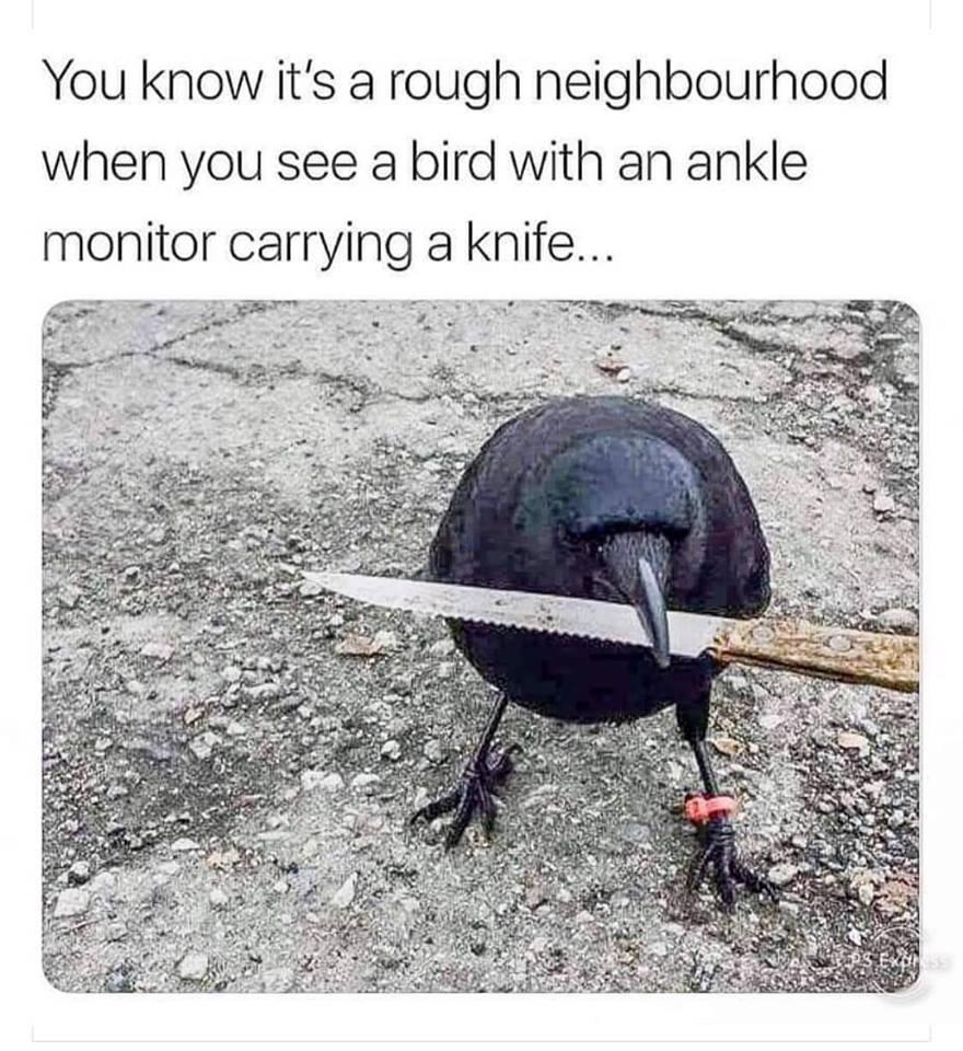 rough bird.jpg