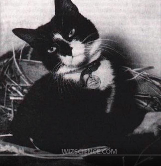 Simon, DM Heroic Ship_s Cat.JPG