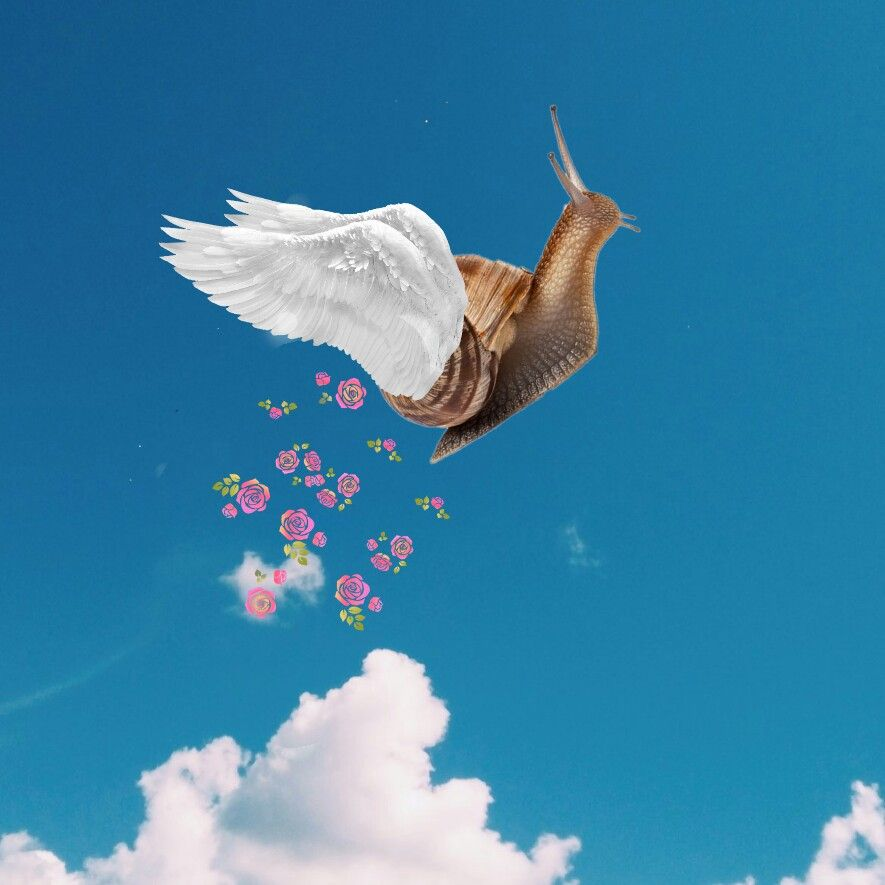Snail with wings.png