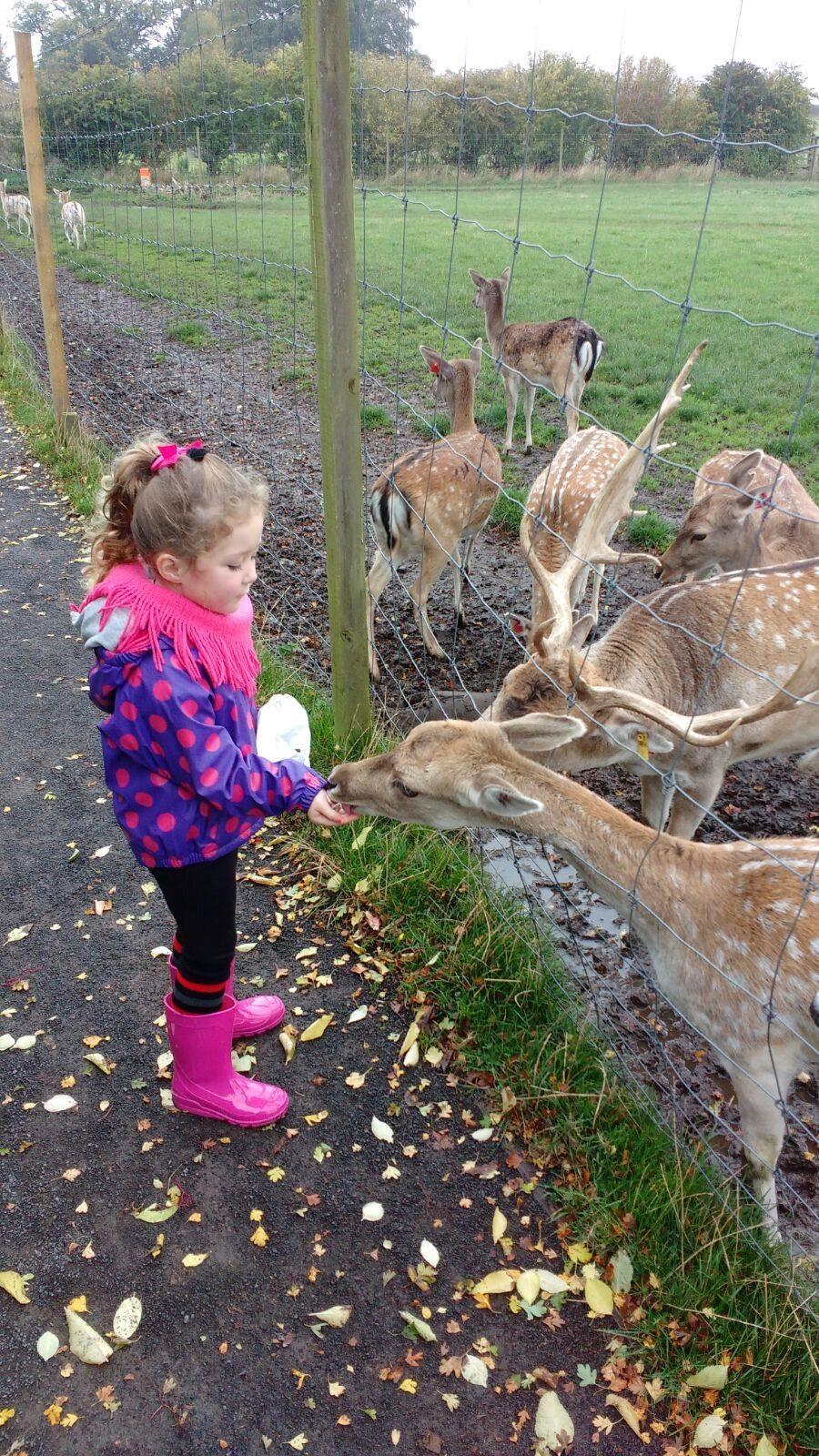 sophia deer.jpg