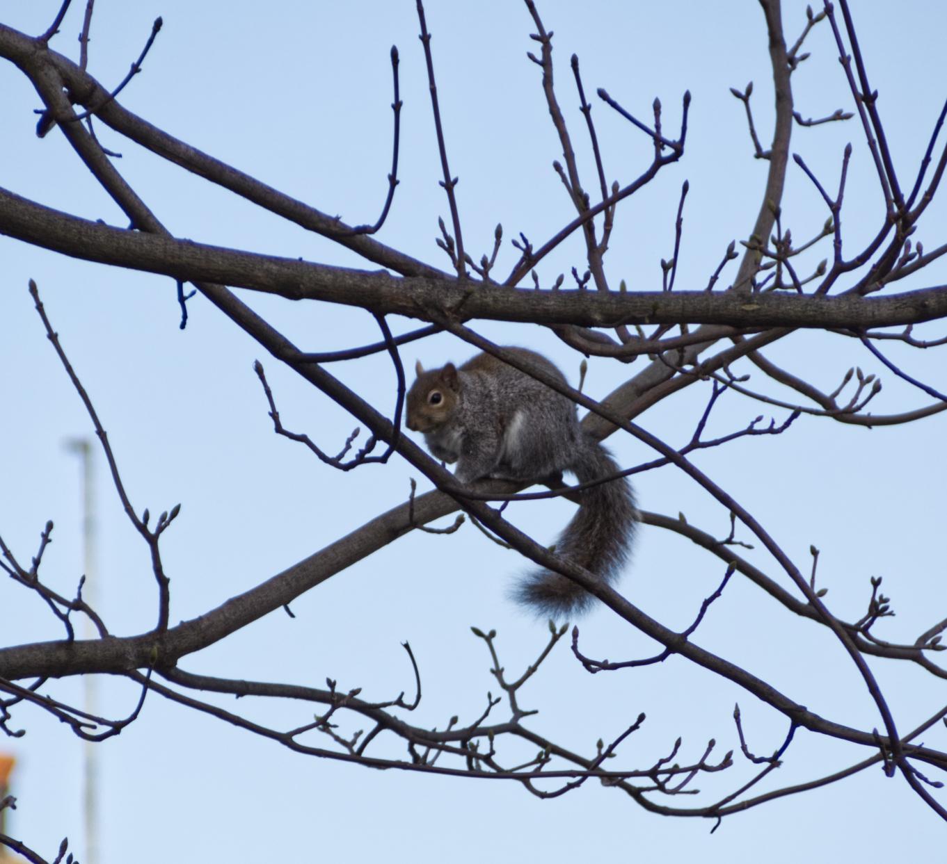 SquirBranch1.jpg