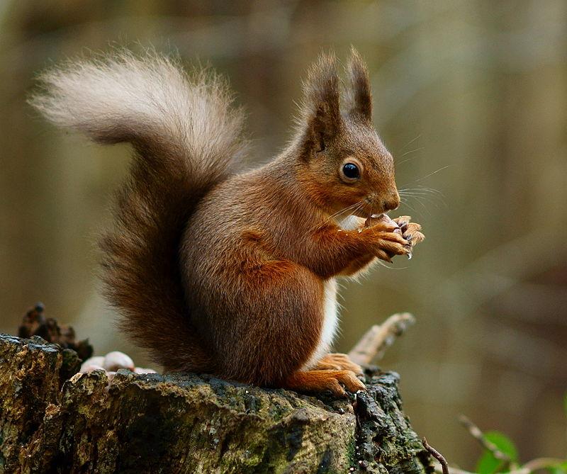 Squirrel_posing.jpg