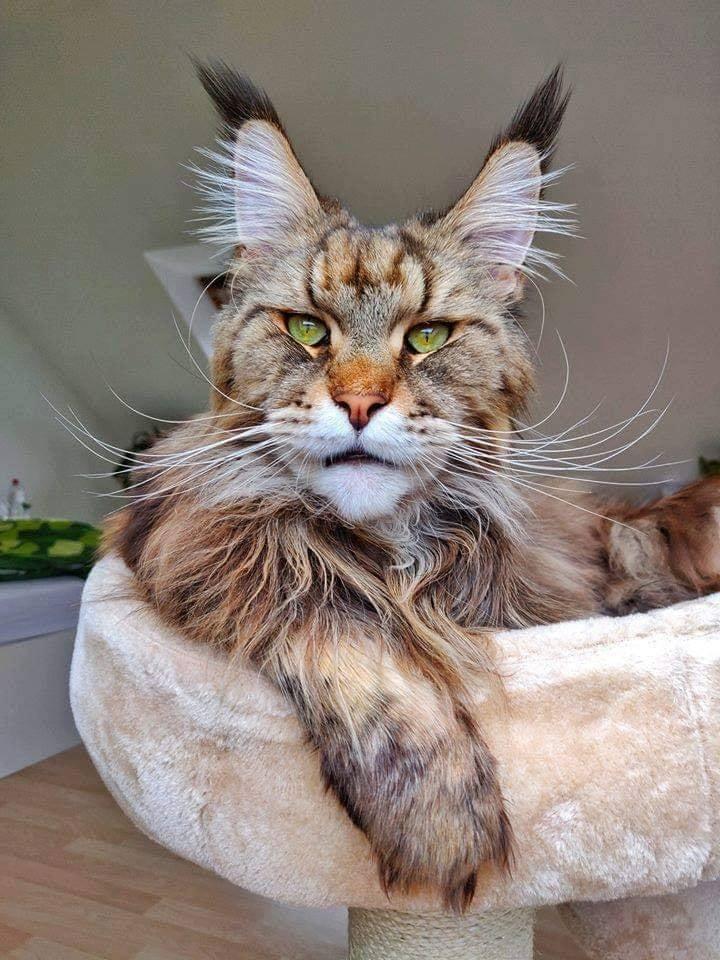 strange cat.jpg