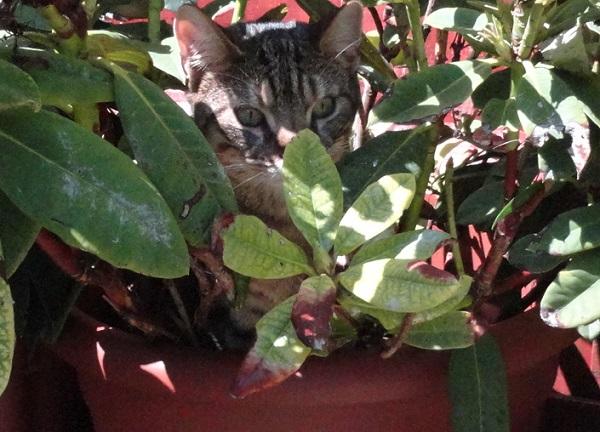 teddy in a flower pot.jpg