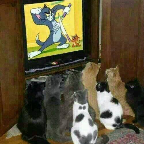tom cats.jpg