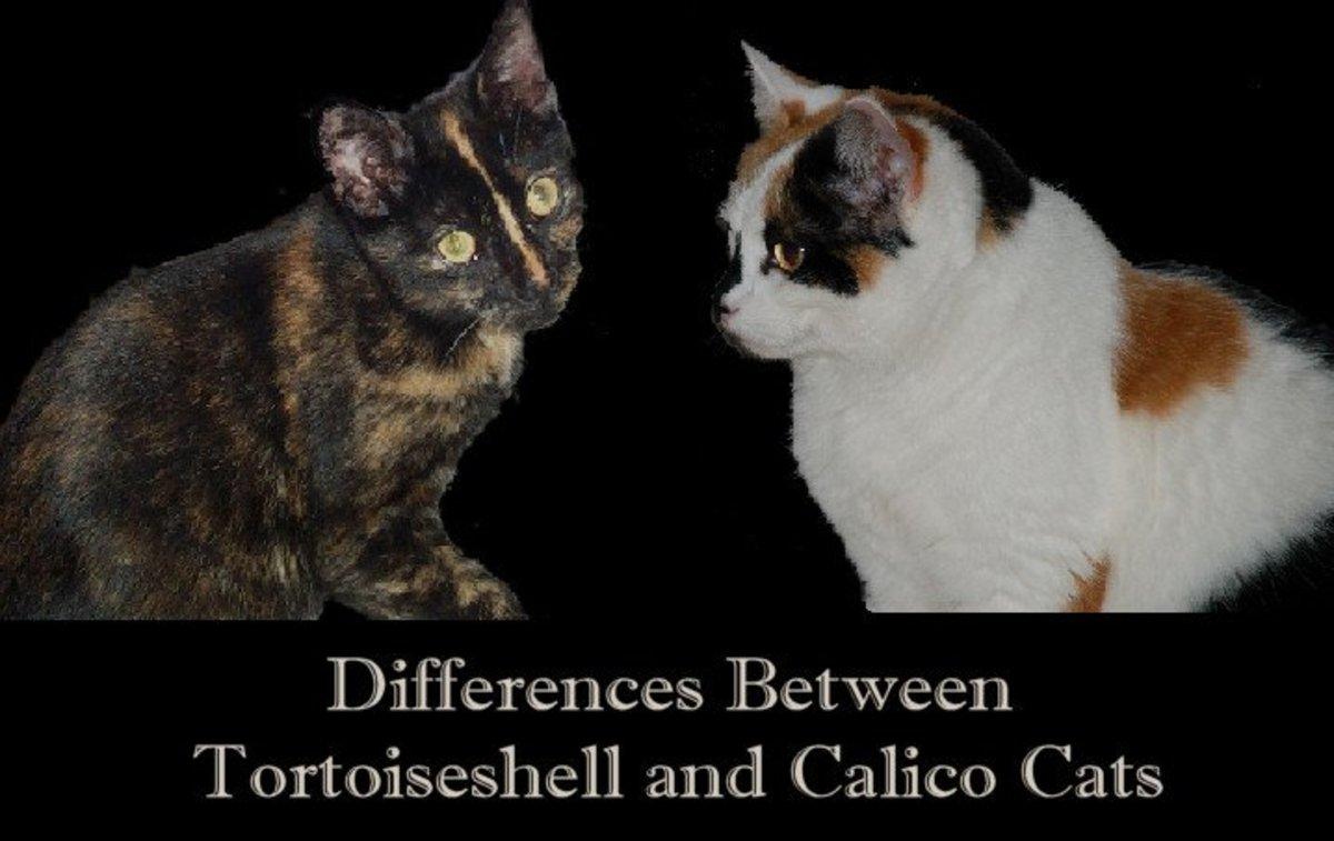 tortoiseshell-cats.jpg