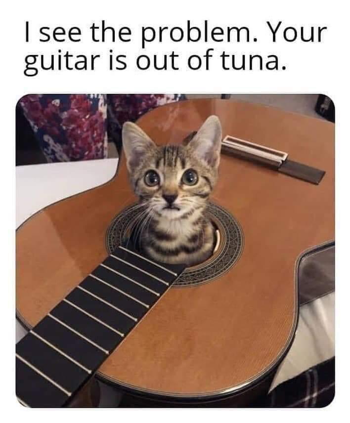 tuna cat.jpg