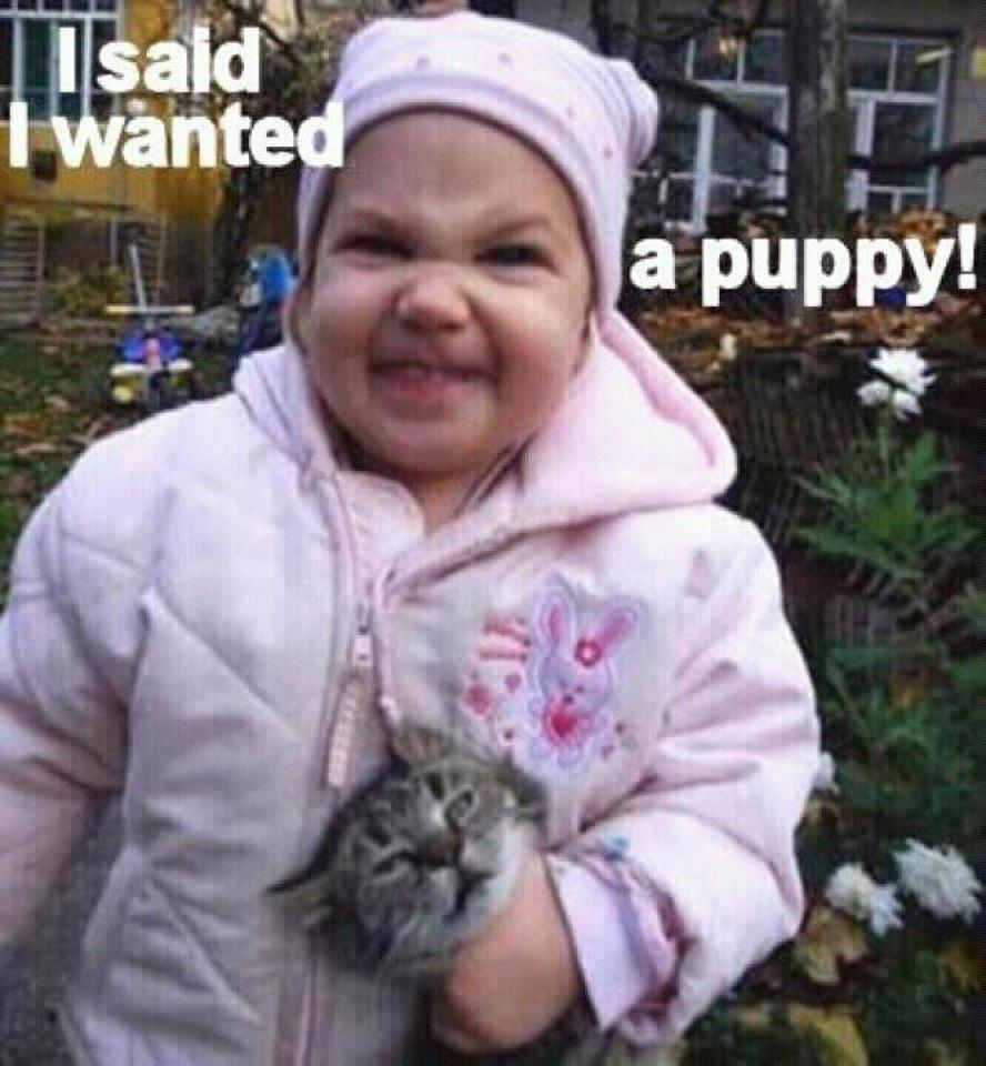 wanted a puppy.jpg